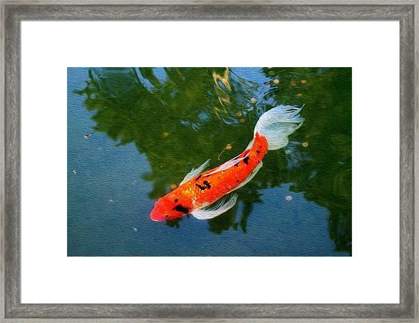 Pensive Koi Framed Print