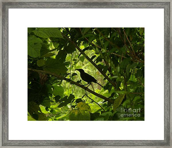 Perched In Green  Framed Print