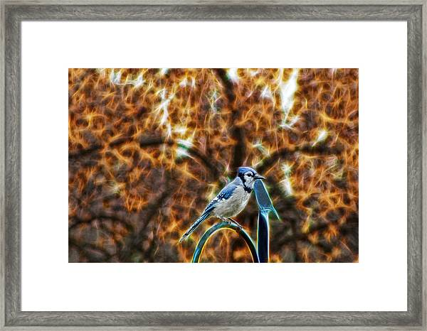 Perched Jay Framed Print