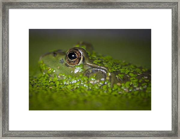 Perfect Camouflaging Framed Print