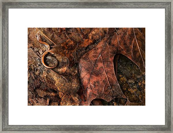 Perfect Disguise Framed Print