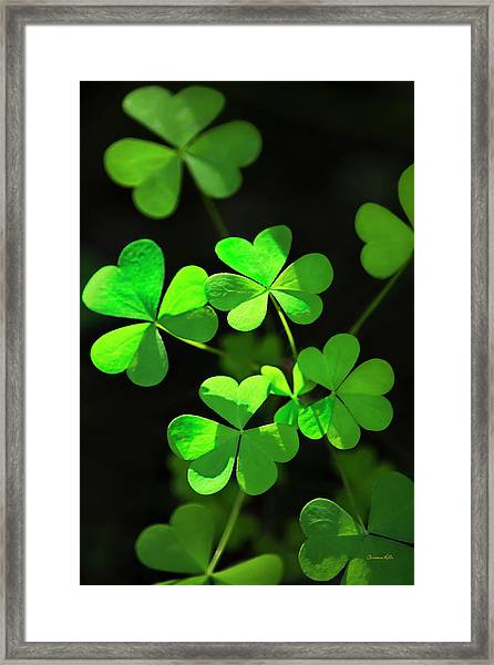 Perfect Green Shamrock Clovers Framed Print