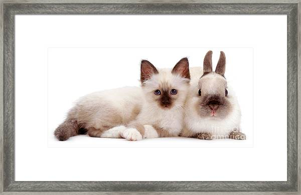 Perfectly Paired Pals Framed Print
