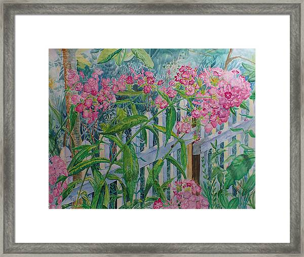 Perky Pink Phlox In A Dahlonega Garden Framed Print