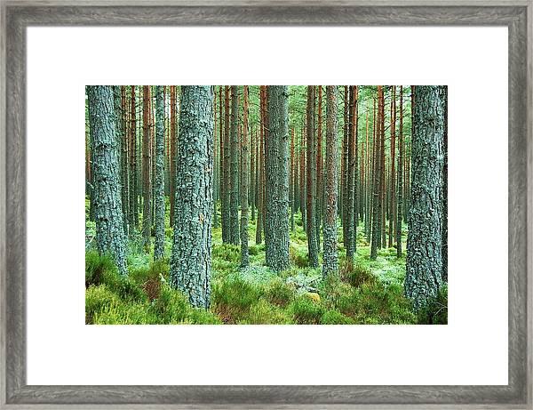 Perpetual Framed Print