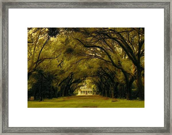 Perplexing Plantation Framed Print