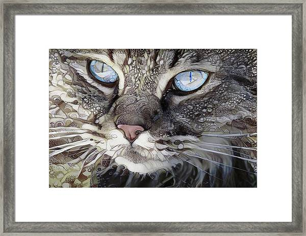 Perry The Persian Cat Framed Print