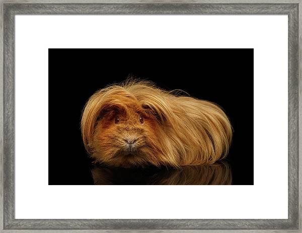 Framed Print featuring the photograph Trump Guinea  by Sergey Taran