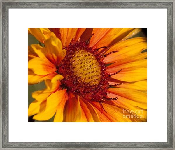 Petals Of Fire Framed Print