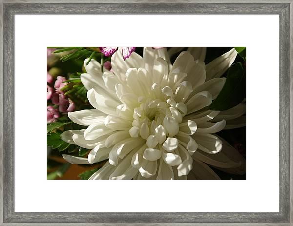 Petals Profusion Framed Print