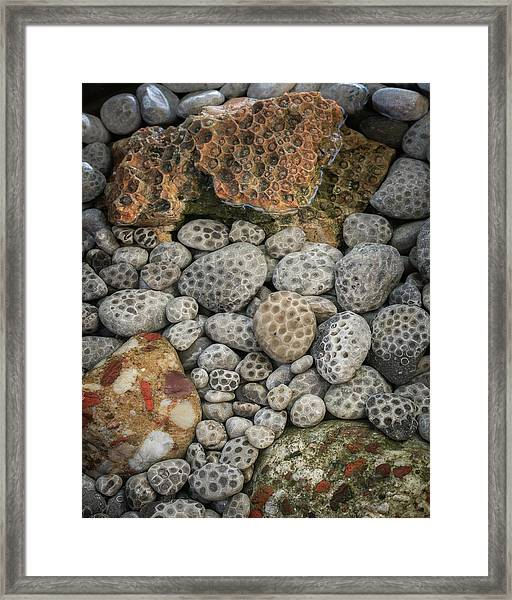 Petoskey And Pudding Stones Framed Print
