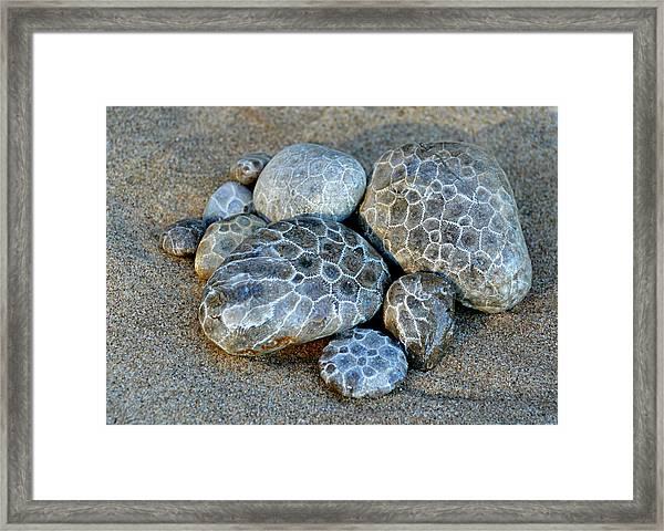 Petoskey Stones Framed Print