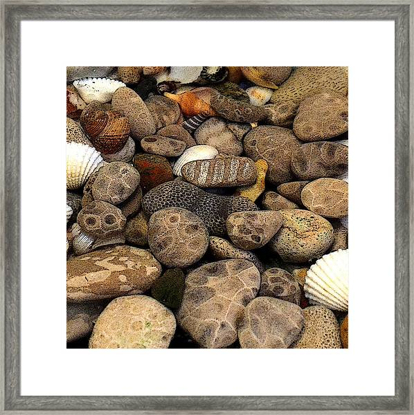 Petoskey Stones With Shells L Framed Print
