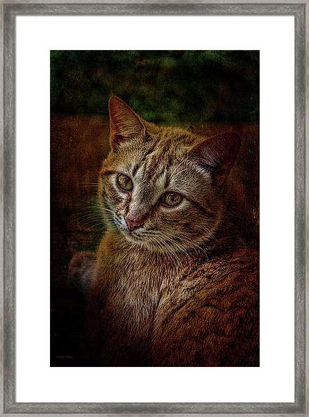 Pets Fat Cat Portrait 2 Framed Print
