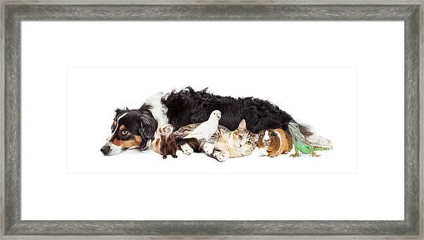 Pets Together On White Banner Framed Print