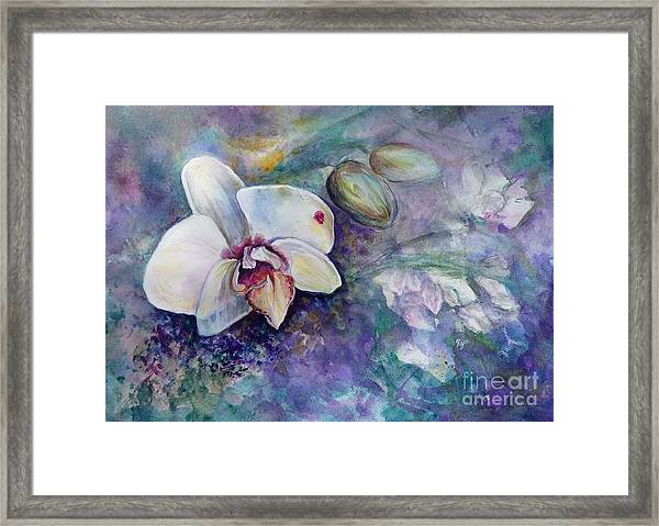 Phalaenopsis Orchid With Hyacinth Background Framed Print