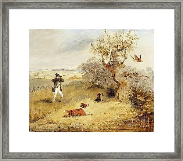 Pheasant Shooting Framed Print