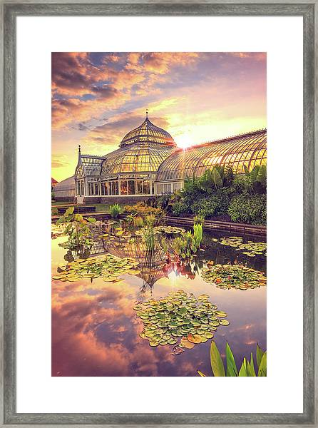 Lilys At Phipps  Framed Print