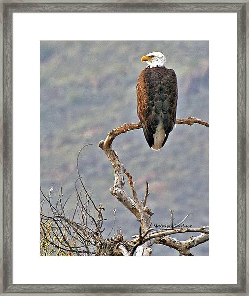 Phoenix Eagle Framed Print
