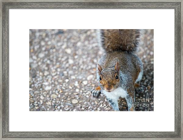 Photo Of Squirel Looking Up From The Ground Framed Print