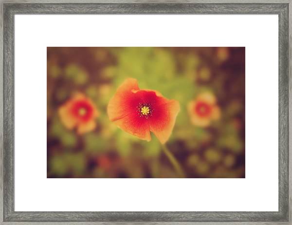Photo1 Framed Print