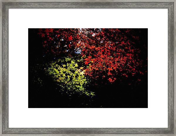 Photo13 Framed Print