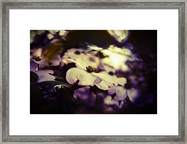 Photo14 Framed Print