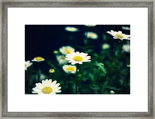 Photo5 Framed Print