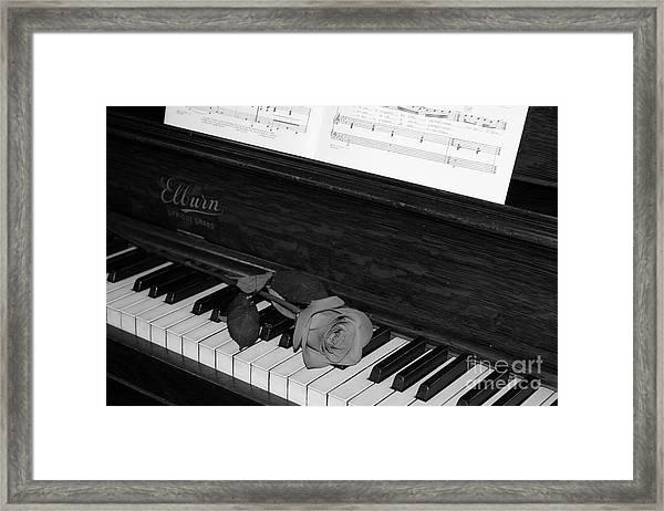 Piano Rose Framed Print