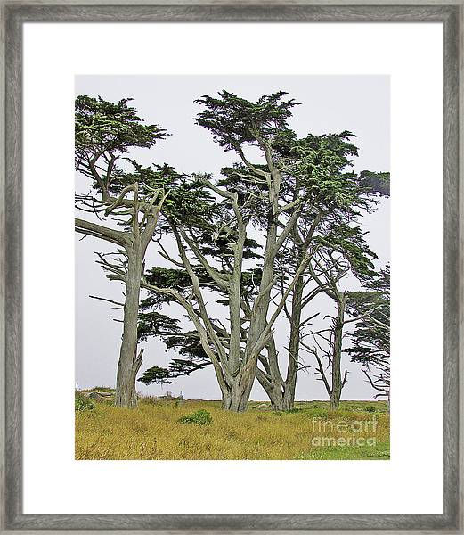 Pierce Pt. Study Framed Print