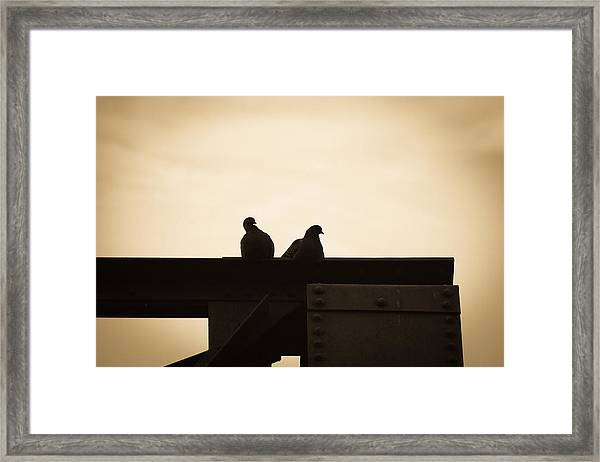 Pigeon And Steel Framed Print