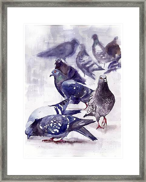 Pigeons Watercolor Framed Print