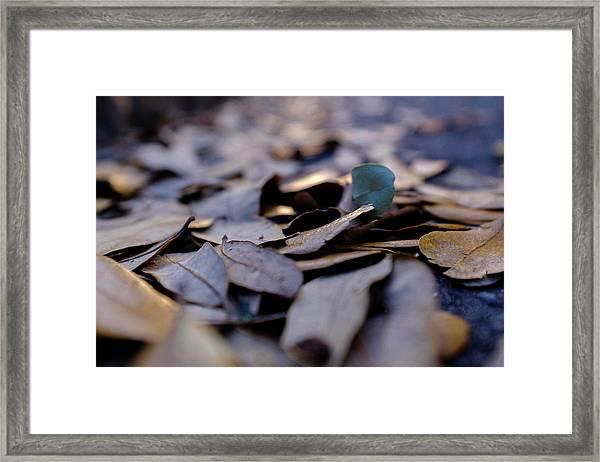 Pile Of Leaves At Dusk In Savannah Georgia Framed Print