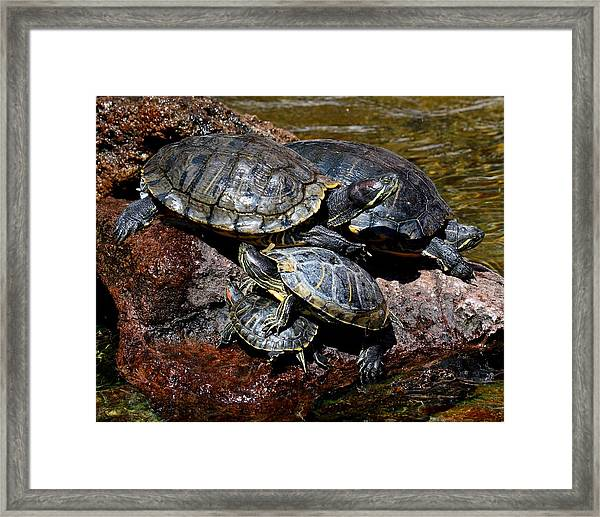 Pile Of Sliders - Turtles Framed Print