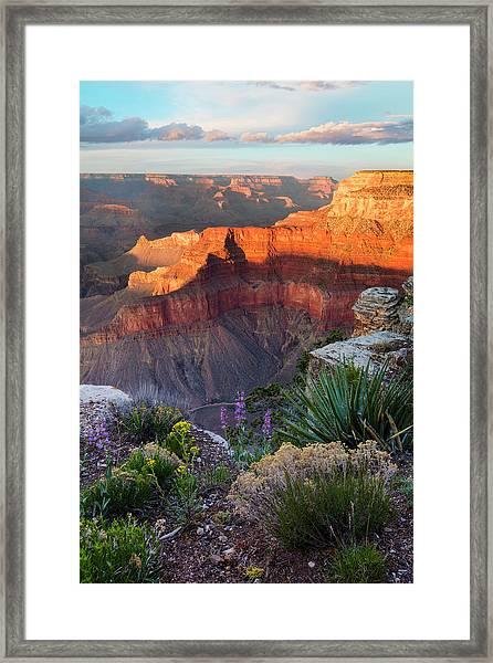 Pima Point Bloom  Framed Print