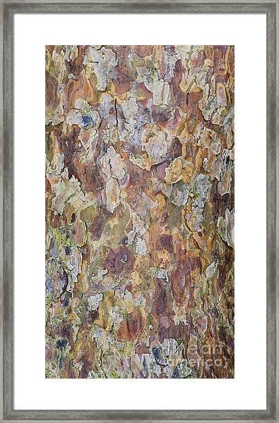 Pine Bark Framed Print