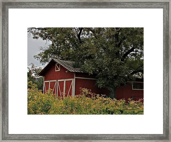 Pine Barn Framed Print