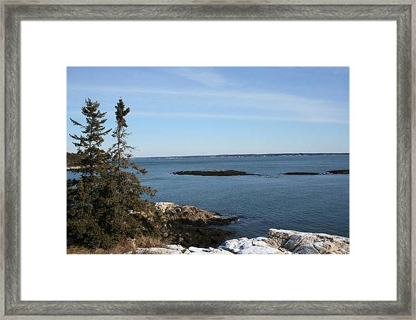 Pine Coast Framed Print