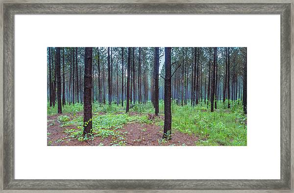 Framed Print featuring the photograph Pine Grove And Fog In Charlotte Nc Panorama by Ranjay Mitra