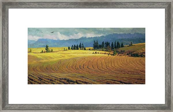 Pine Grove Framed Print