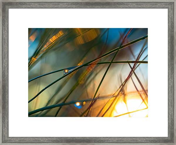 Pine Needle Sunset Framed Print