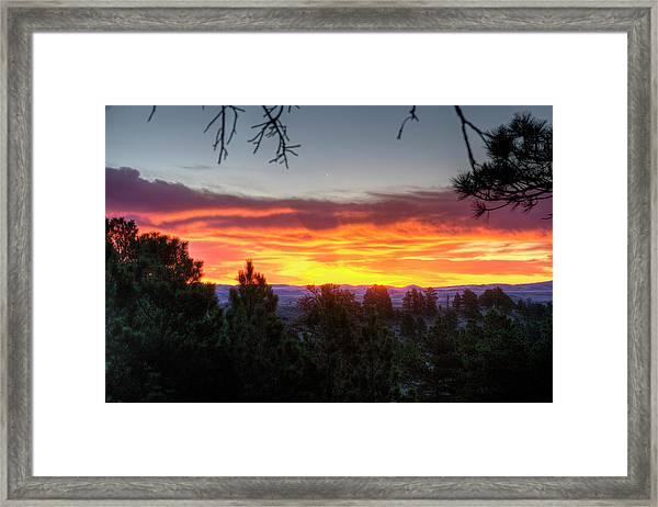 Pine Sunrise Framed Print