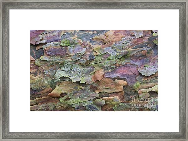 Pine Tree Bark Framed Print
