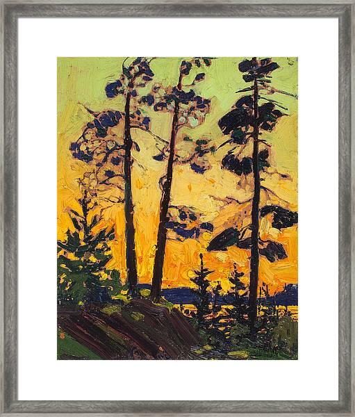 Pine Trees At Sunset Framed Print