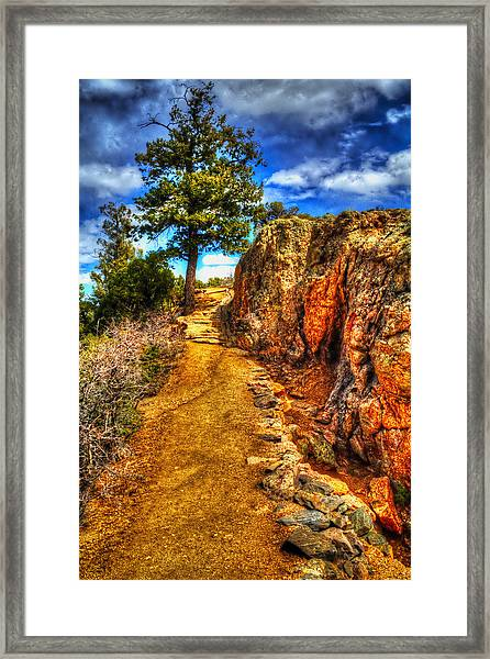 Ponderosa Pine Guarding The Trail Framed Print