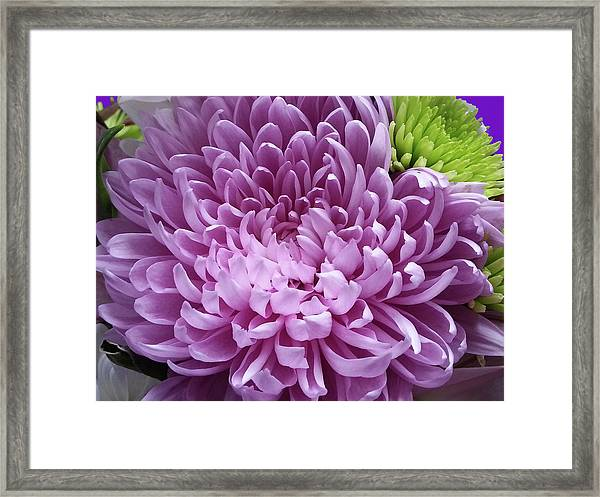 Pink And Green Defined Framed Print