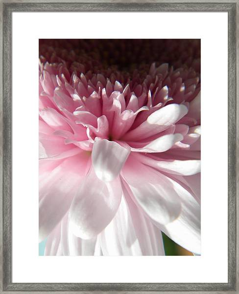 Pink And White Framed Print by Alyona Firth