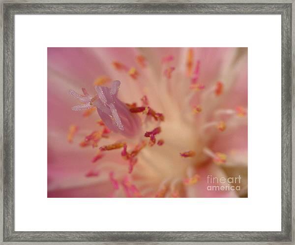 Pink Bliss Framed Print