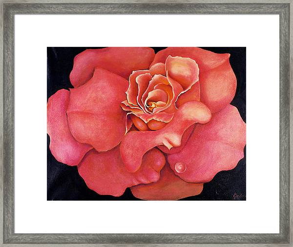 Pink Blush Framed Print