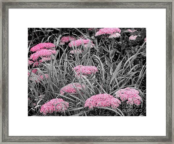 Pink Carved Cowslip Framed Print